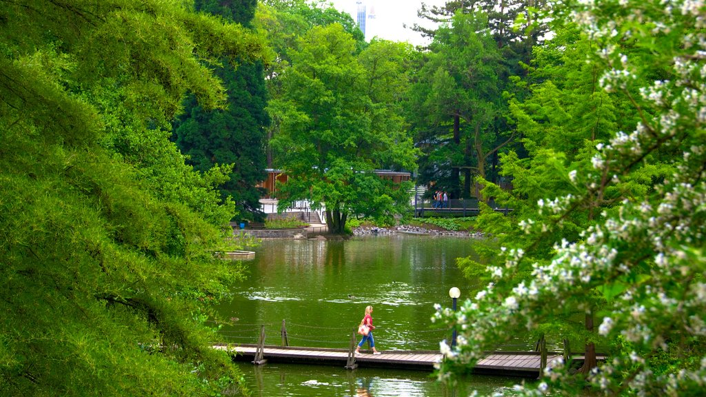 Palmengarten which includes a lake or waterhole, wildflowers and a garden