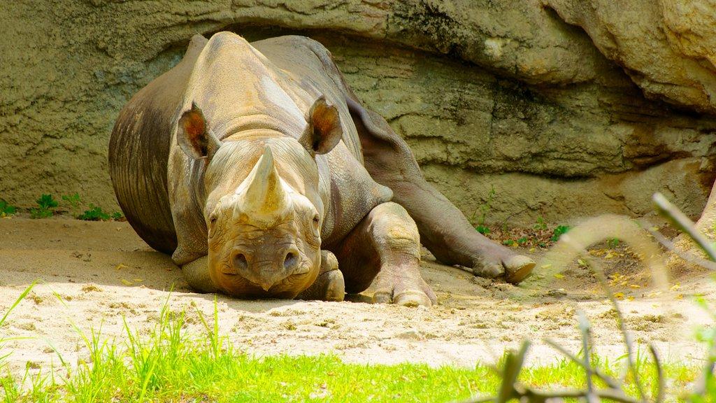 Tennoji Zoo showing land animals and zoo animals