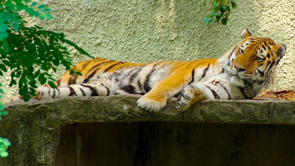 Tennoji Zoo featuring dangerous animals, land animals and zoo animals