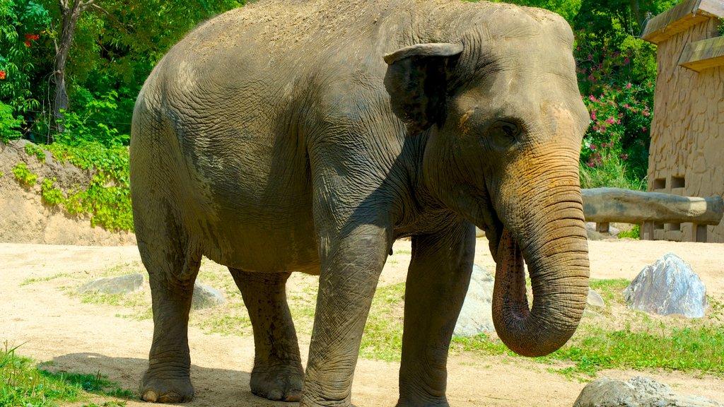 Tennoji Zoo showing zoo animals and land animals