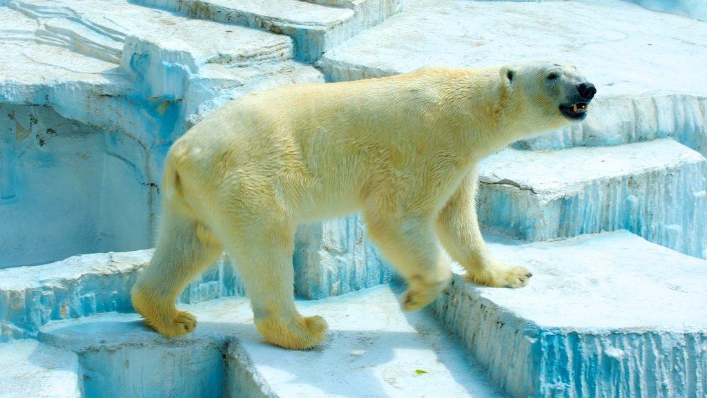 Tennoji Zoo featuring zoo animals, dangerous animals and land animals