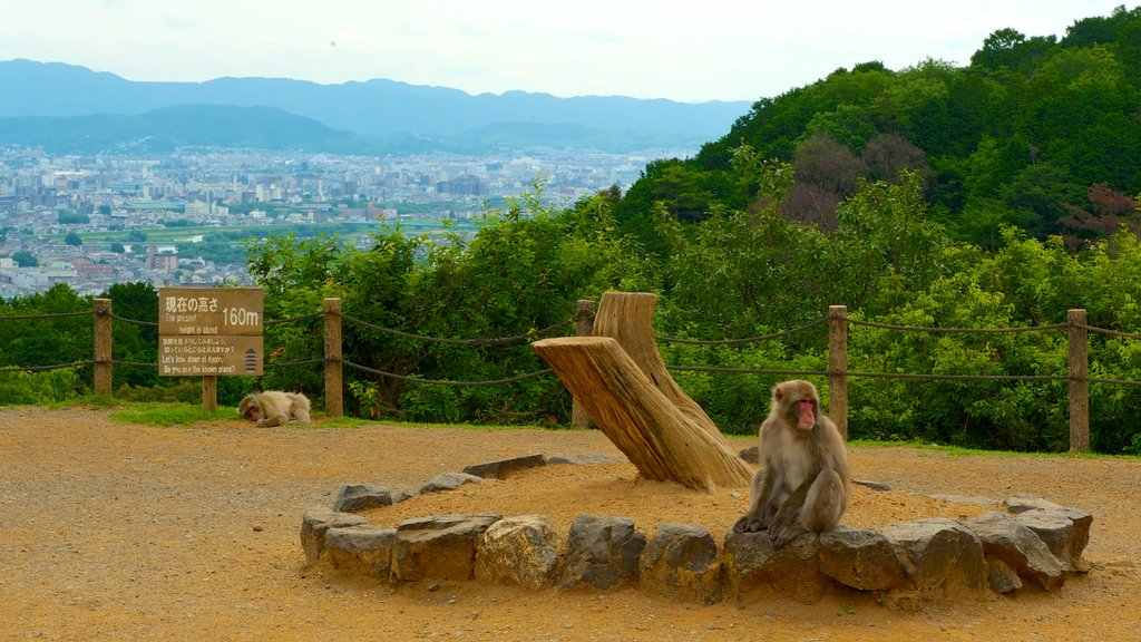 Arashiyama Monkey Park featuring animals, zoo animals and a park