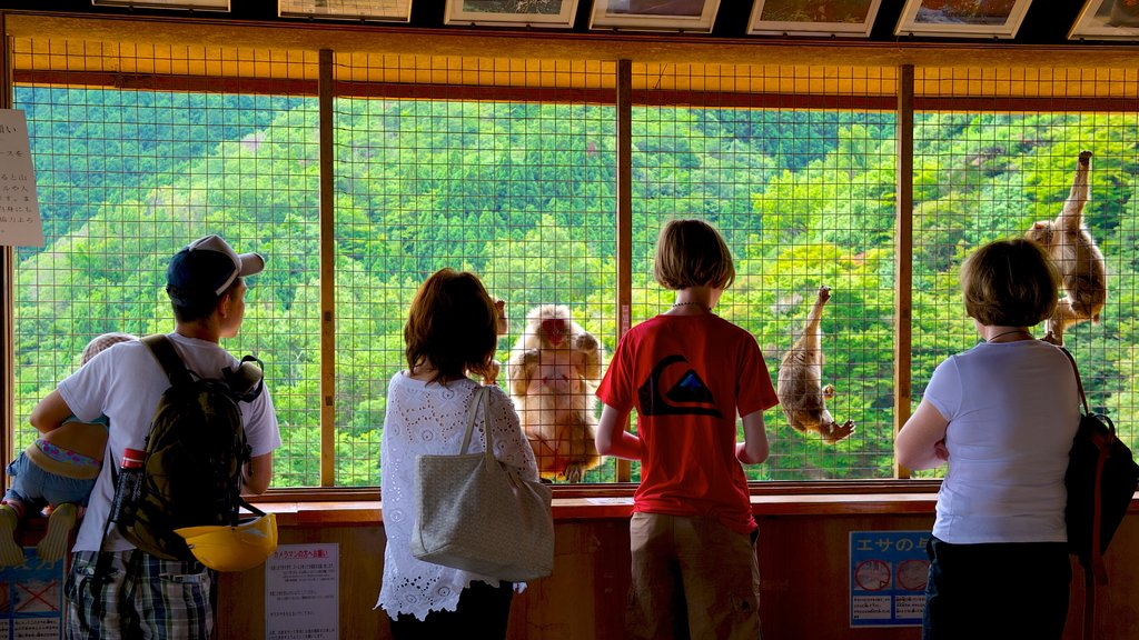 Arashiyama Monkey Park featuring zoo animals and interior views as well as a small group of people