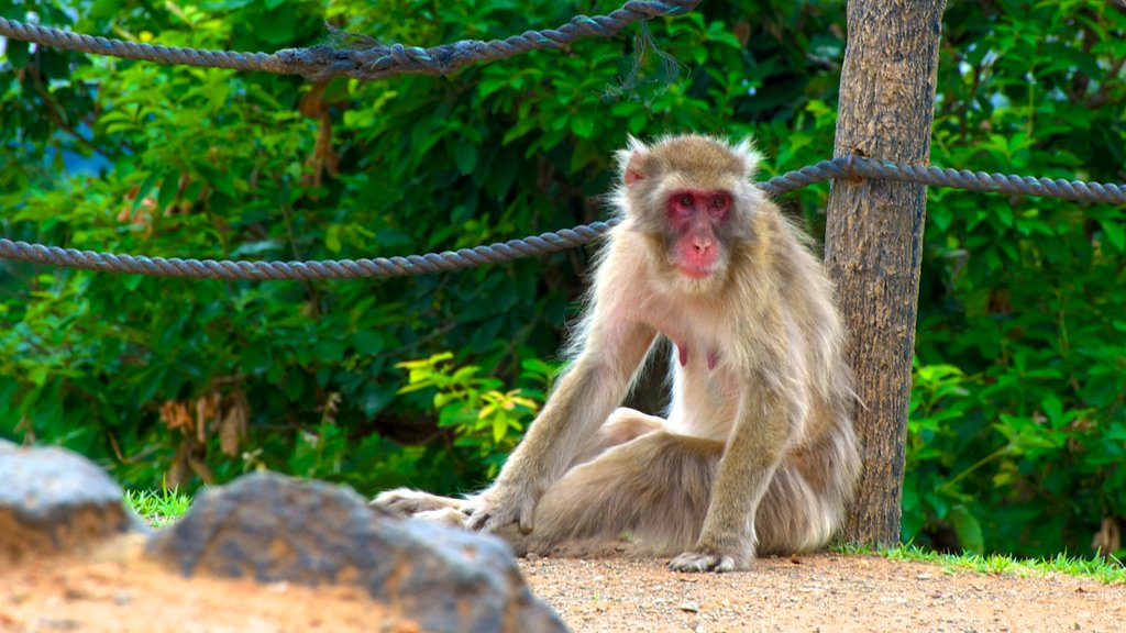 Arashiyama Monkey Park showing zoo animals and animals
