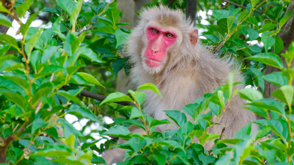 Arashiyama Monkey Park which includes animals and zoo animals
