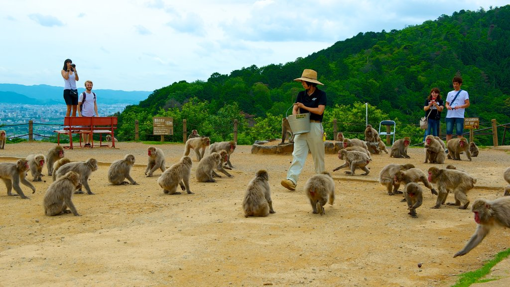 Arashiyama Monkey Park showing zoo animals, a garden and cuddly or friendly animals