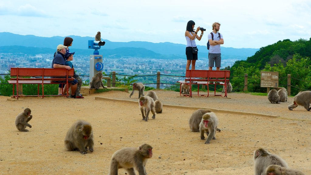 Kyōto which includes a garden, views and zoo animals