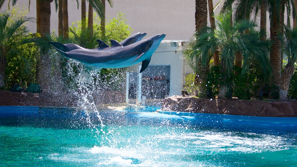 Mirage Casino showing marine life and performance art