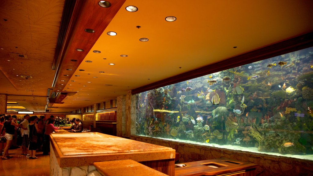 Mirage Casino showing a hotel, marine life and interior views