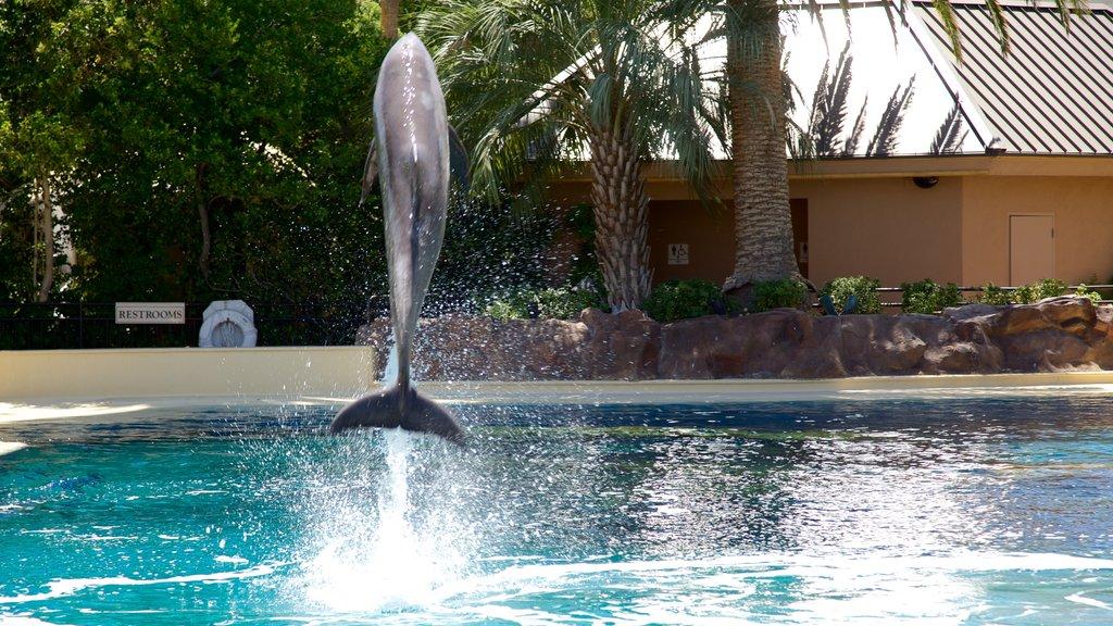 Mirage Casino showing performance art and marine life