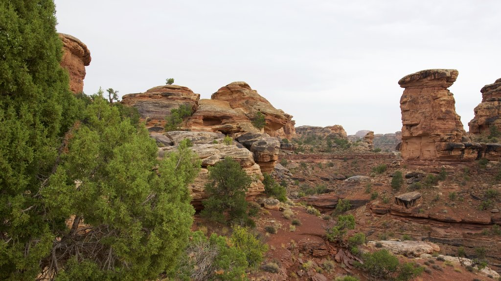 Big Spring Canyon Overlook showing a gorge or canyon and landscape views