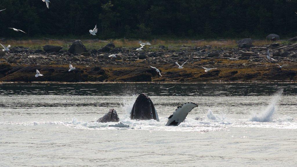 Funter Bay State Marine Park featuring bird life, marine life and a lake or waterhole