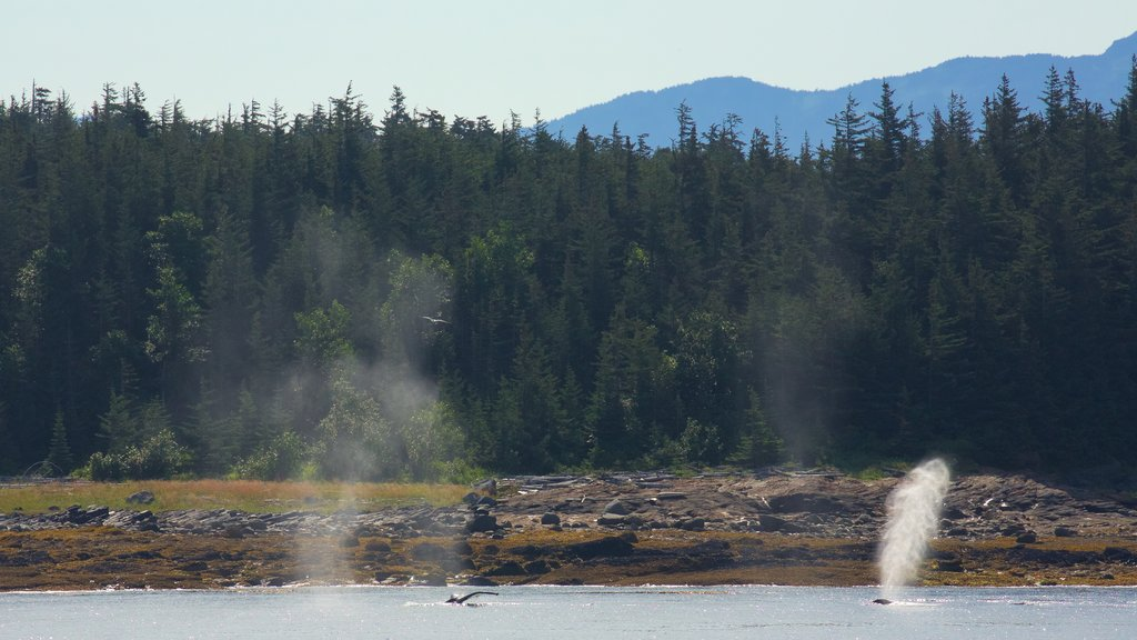 Funter Bay State Marine Park featuring marine life and a lake or waterhole