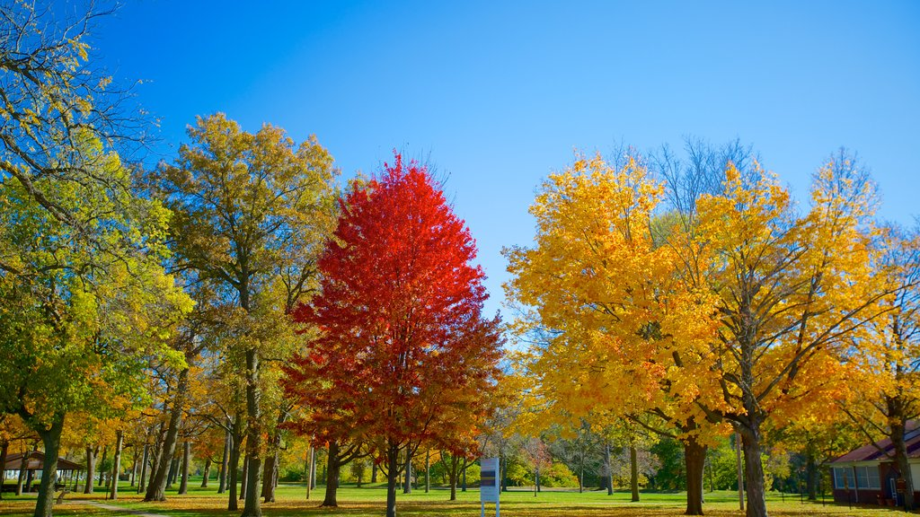 Chautauqua Park which includes fall colors and a garden