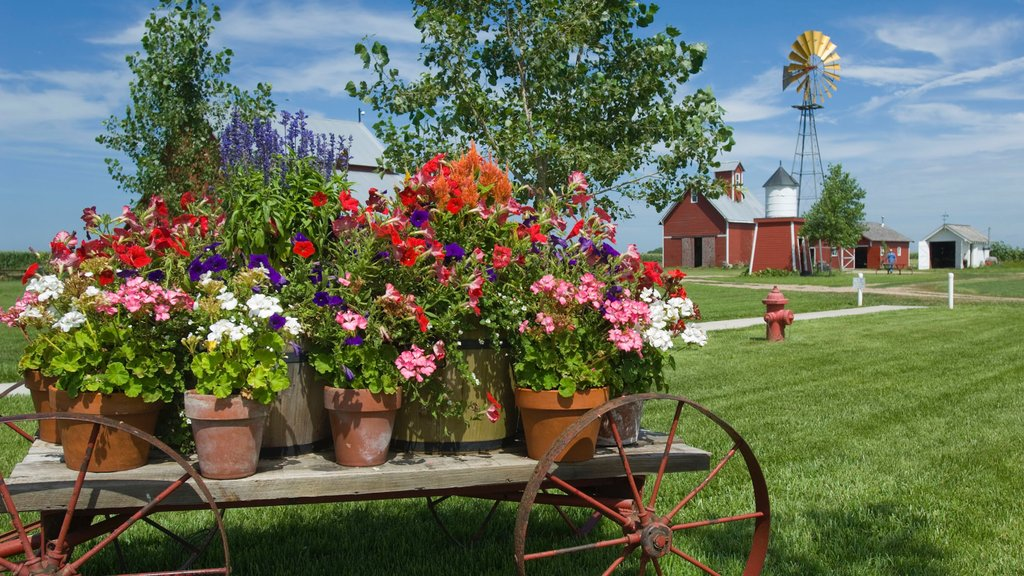 Wessels Living History Farm showing farmland and flowers