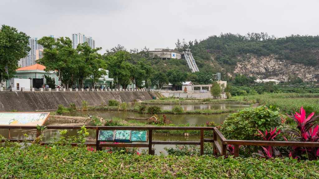 Taipa showing a garden and a pond