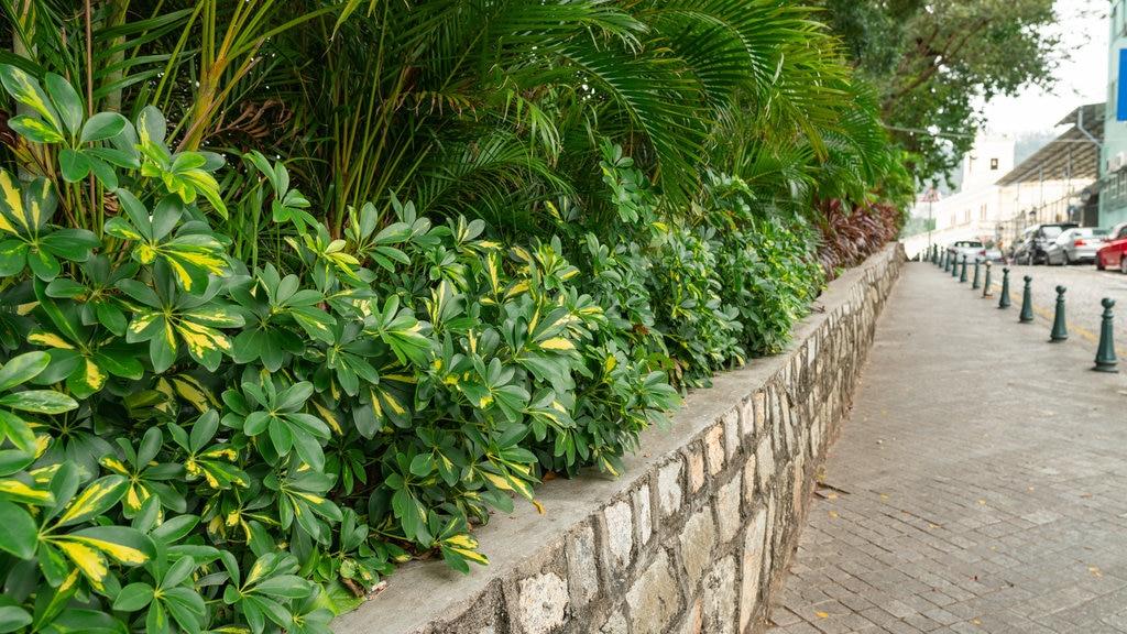 Taipa featuring a garden