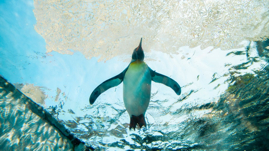 Asahiyama Zoo showing marine life