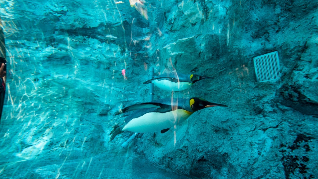 Asahiyama Zoo which includes marine life