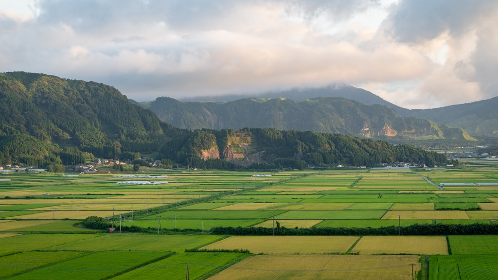 Yufuin showing landscape views and farmland