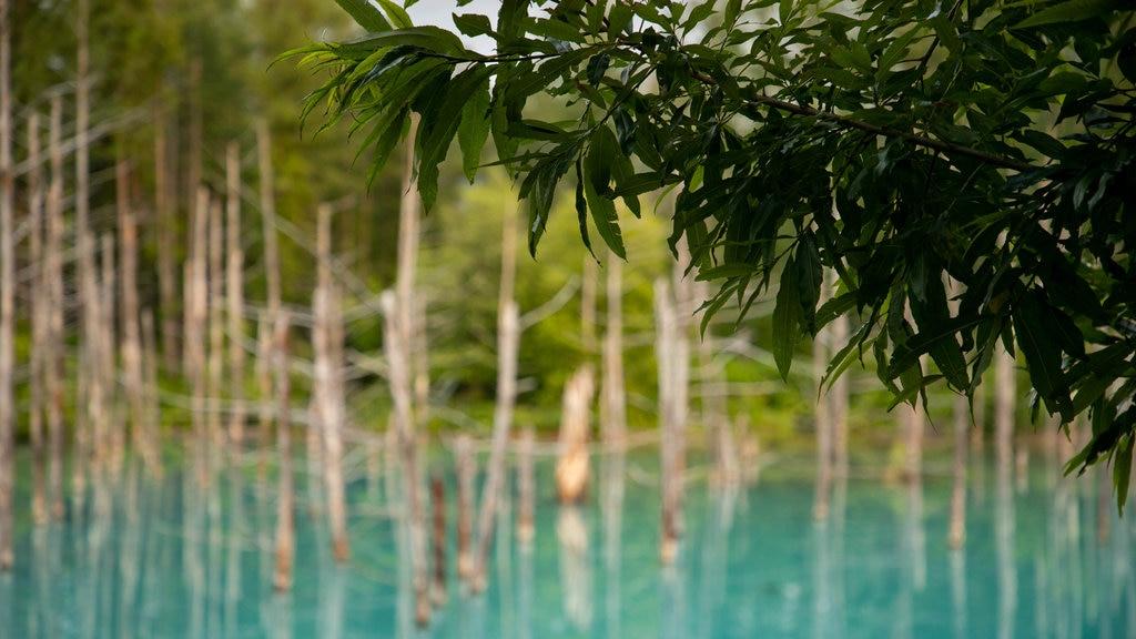 Asahikawa showing tropical scenes