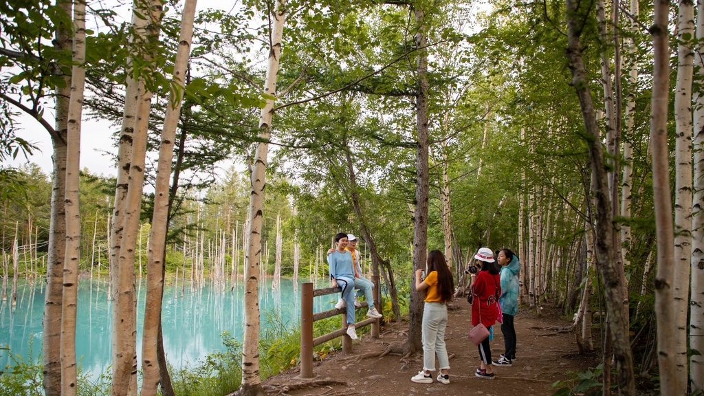 Asahikawa which includes a park and tropical scenes as well as a small group of people