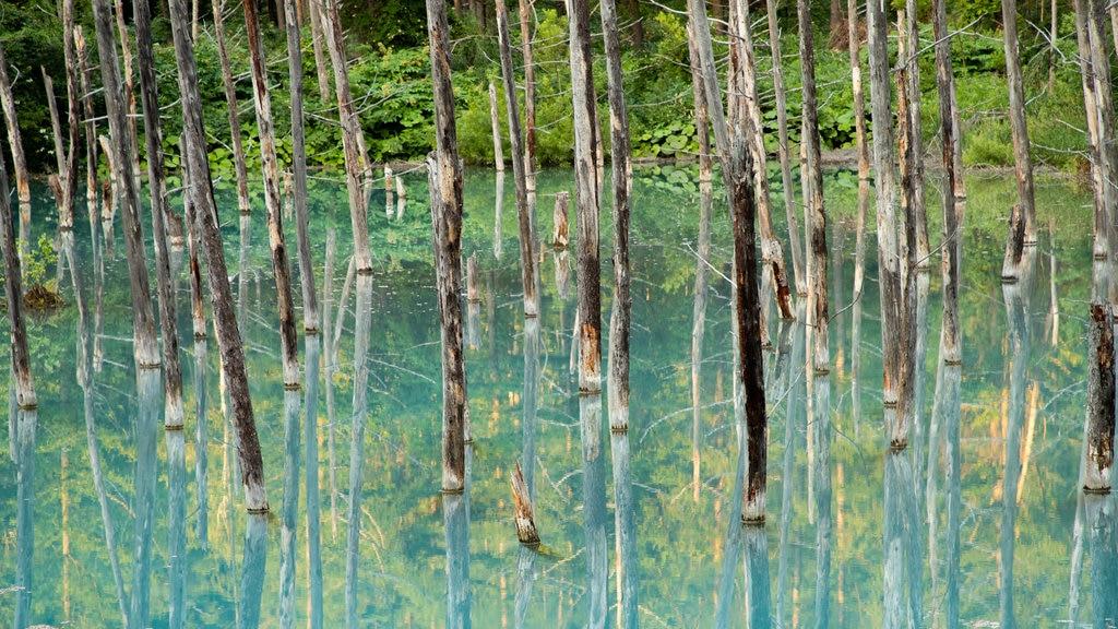 Asahikawa showing tropical scenes and a lake or waterhole