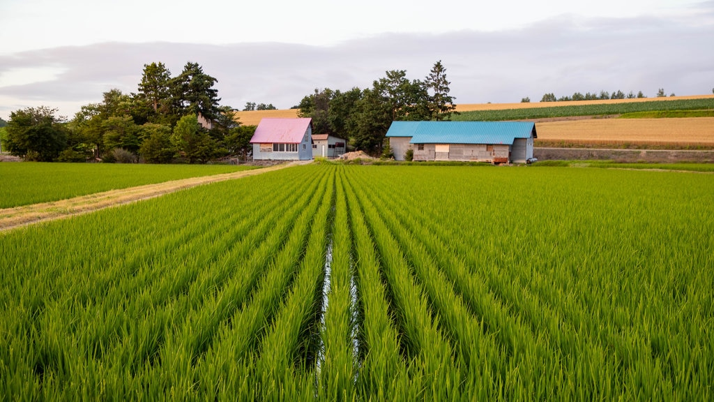 Asahikawa which includes farmland, landscape views and tranquil scenes