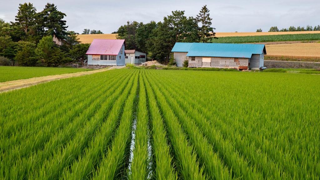Asahikawa featuring landscape views, farmland and tranquil scenes
