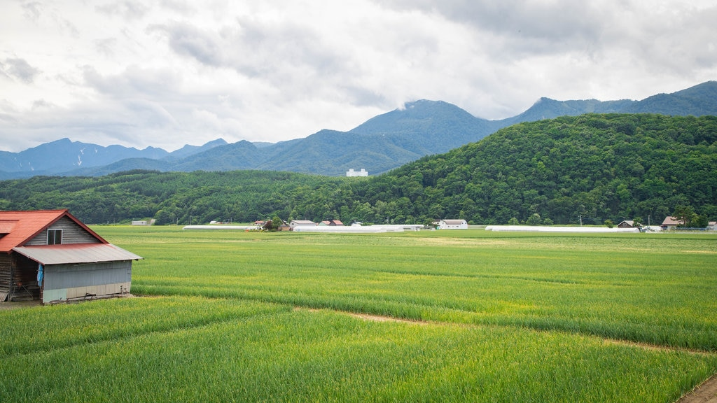 Furano featuring landscape views and farmland
