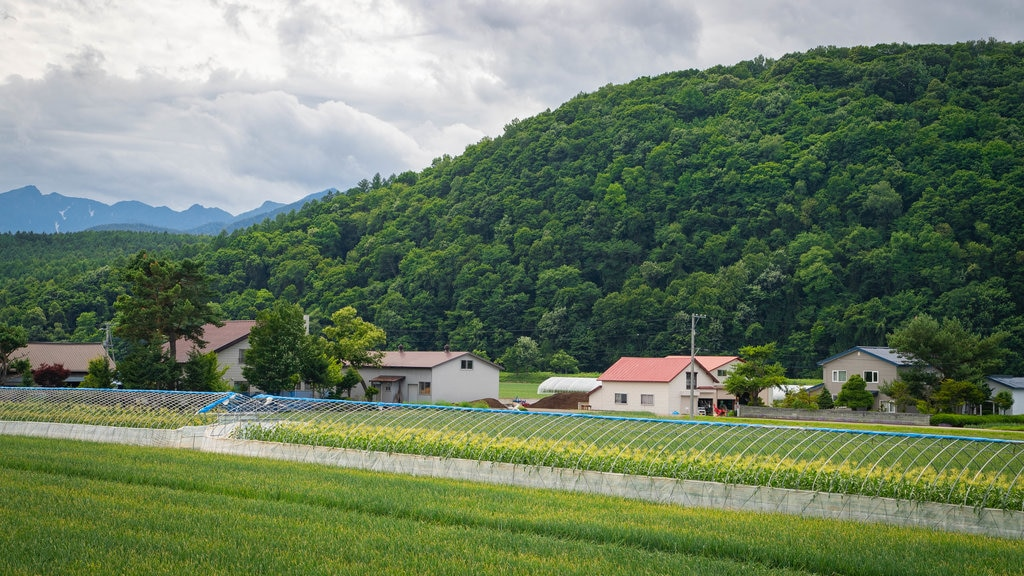 Furano which includes a small town or village and farmland