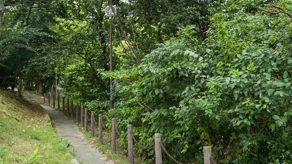 Matsuyama featuring a garden