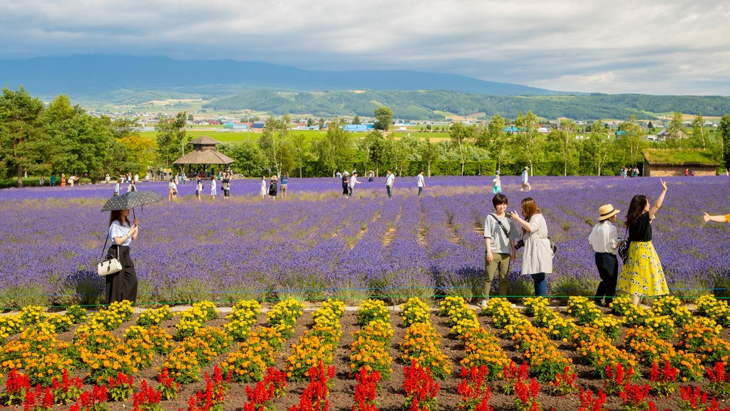 Farm Tomita showing a park, wildflowers and flowers