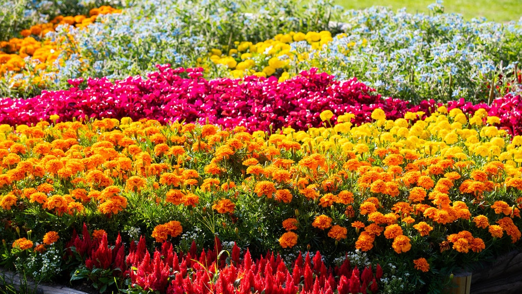 Odori Park showing wildflowers, a garden and flowers