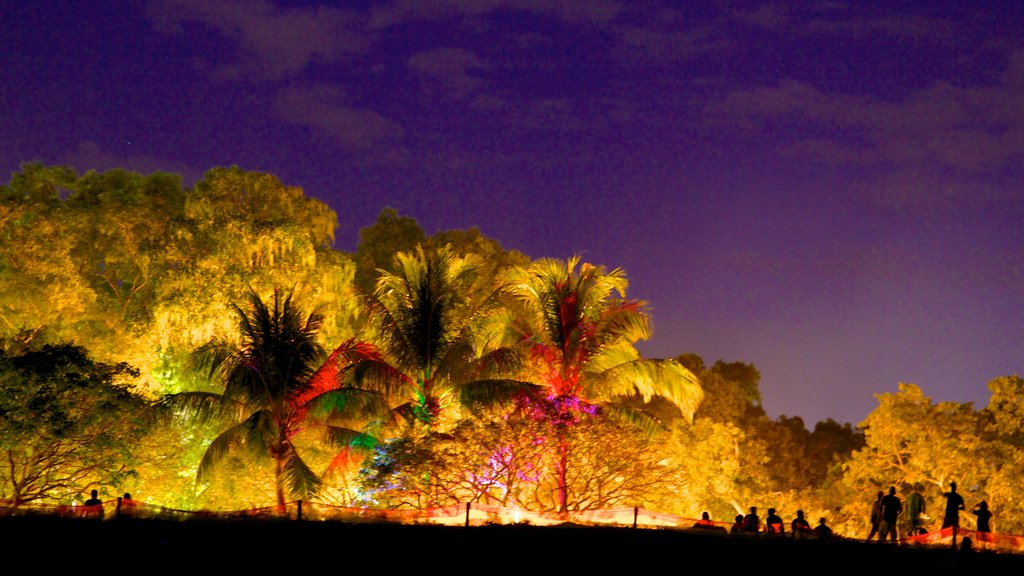 Mindil Beach which includes night scenes and tropical scenes