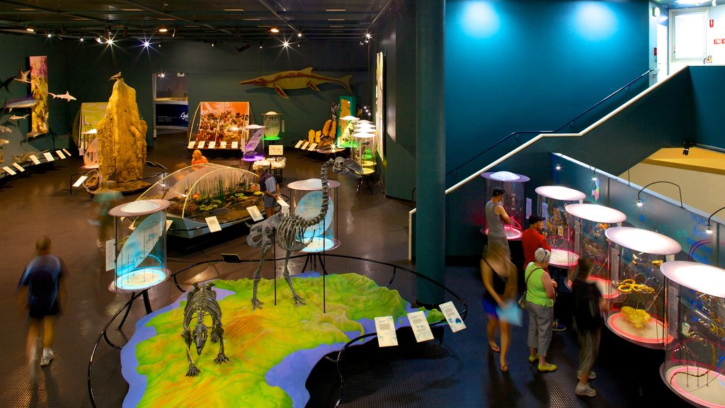 Museum and Art Gallery of the Northern Territory featuring interior views