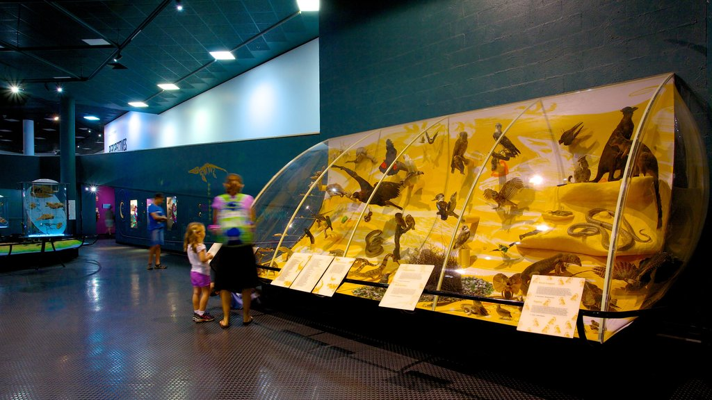 Museum and Art Gallery of the Northern Territory which includes interior views