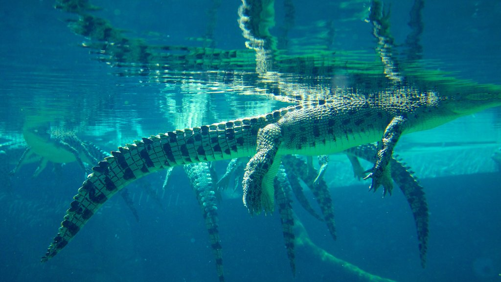 Crocosaurus Cove showing dangerous animals and marine life