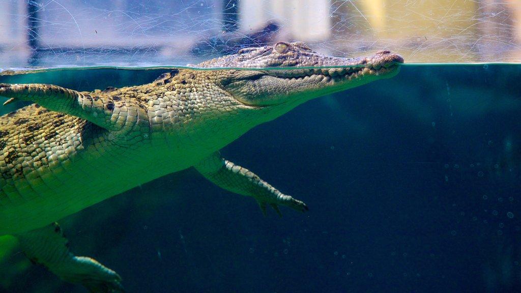 Crocosaurus Cove showing marine life and dangerous animals