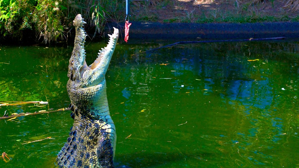 Crocodylus Park showing zoo animals, a pond and dangerous animals