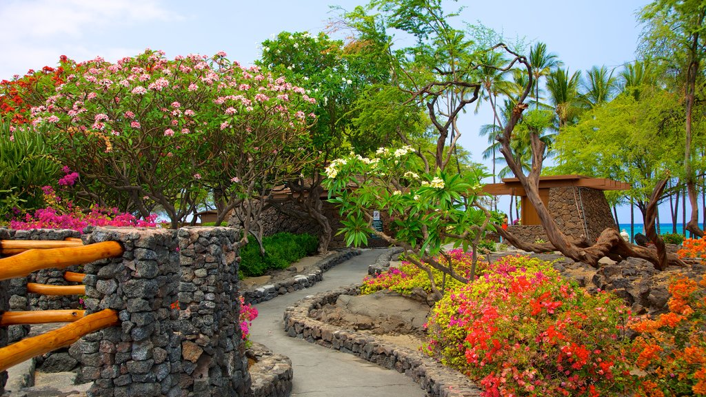 Hawaii showing tropical scenes, flowers and a park