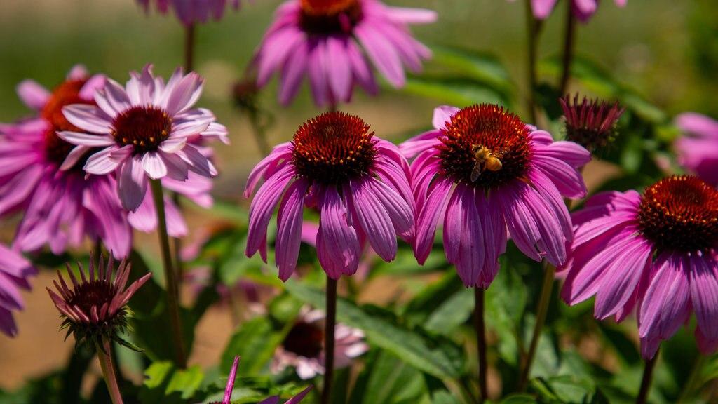 Nakajima Park featuring wildflowers