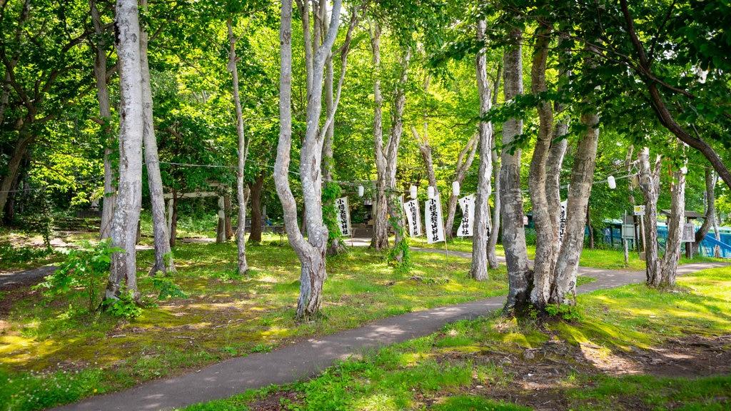 Monte Tengu ofreciendo un parque