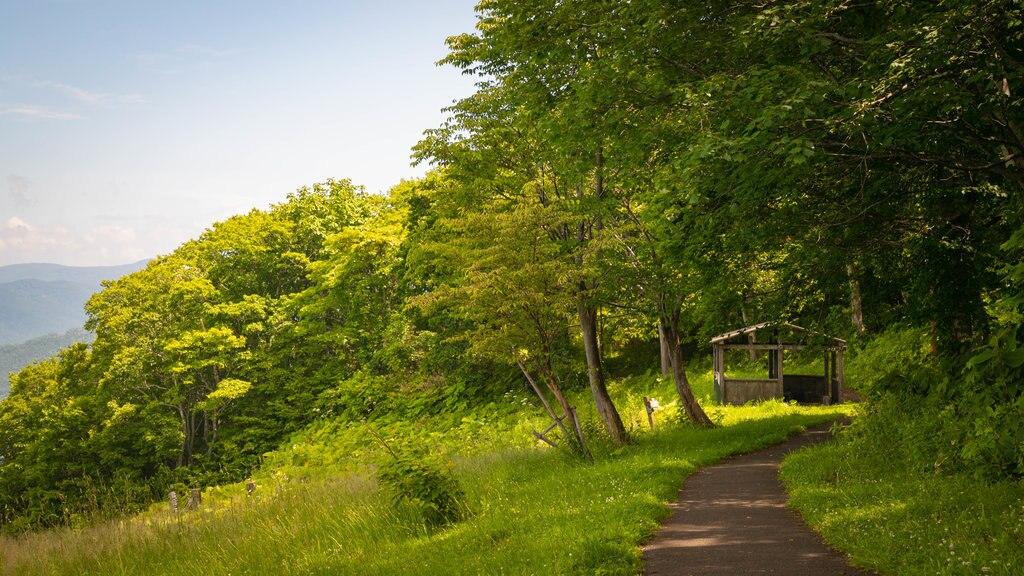 Monte Tengu que incluye un jardín