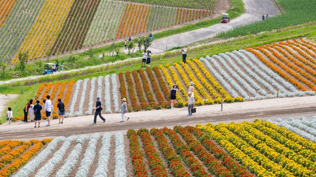 Shikisai no Oka showing a park, farmland and flowers