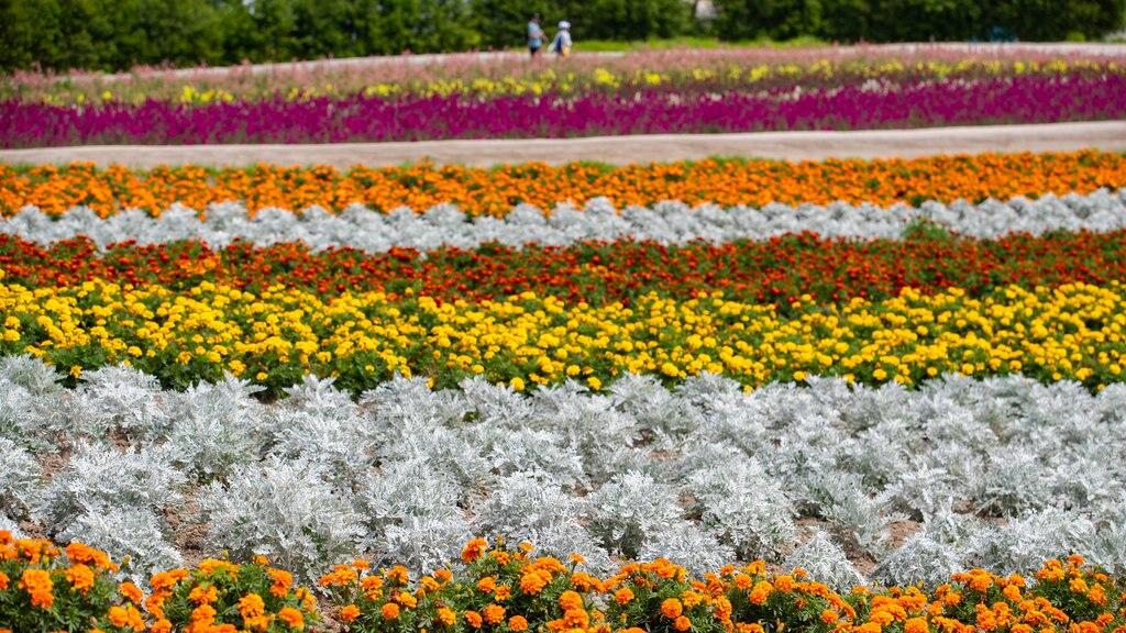 Shikisai no Oka which includes a park, farmland and flowers
