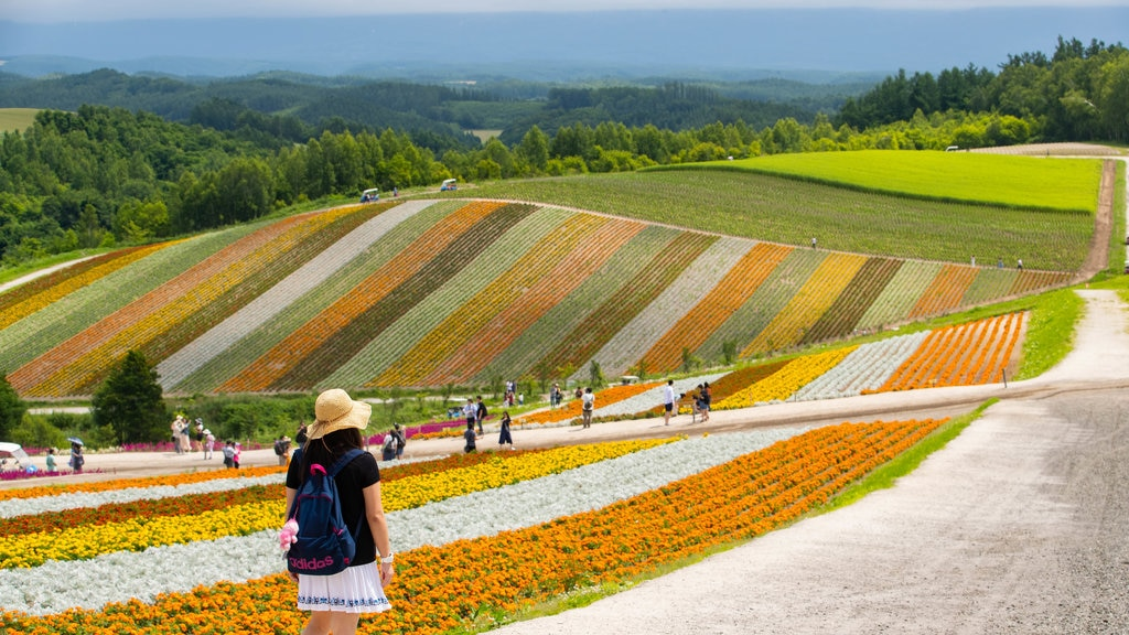 Shikisai no Oka showing flowers, farmland and landscape views