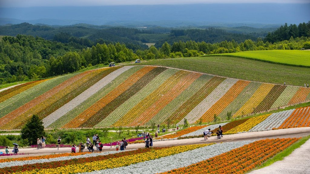 Shikisai no Oka featuring flowers, landscape views and farmland
