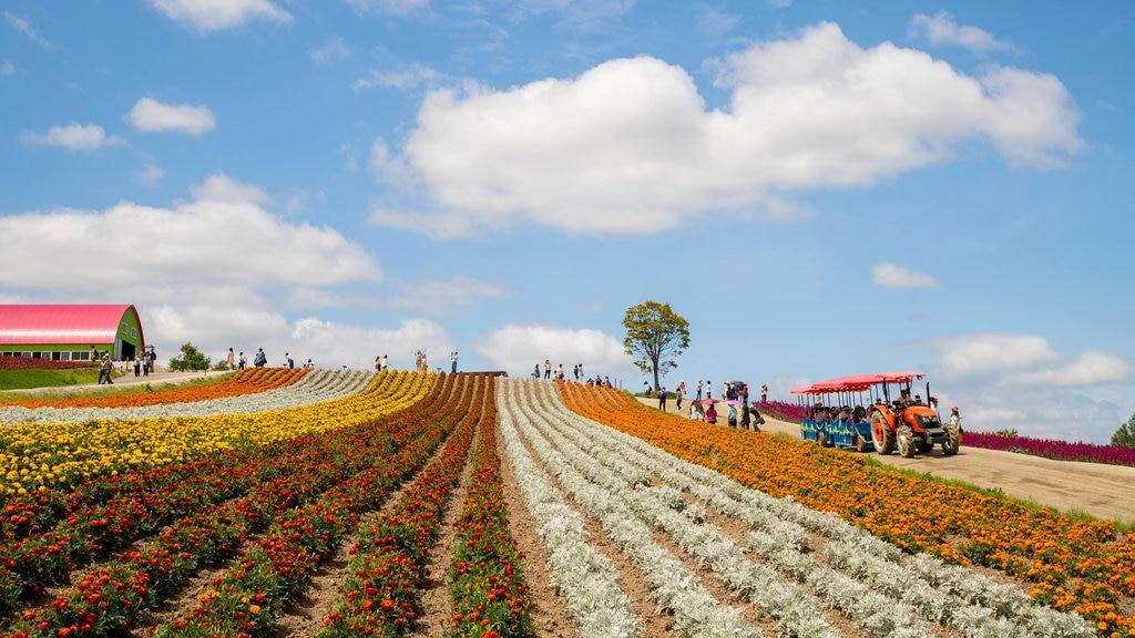 Shikisai no Oka which includes landscape views, farmland and flowers
