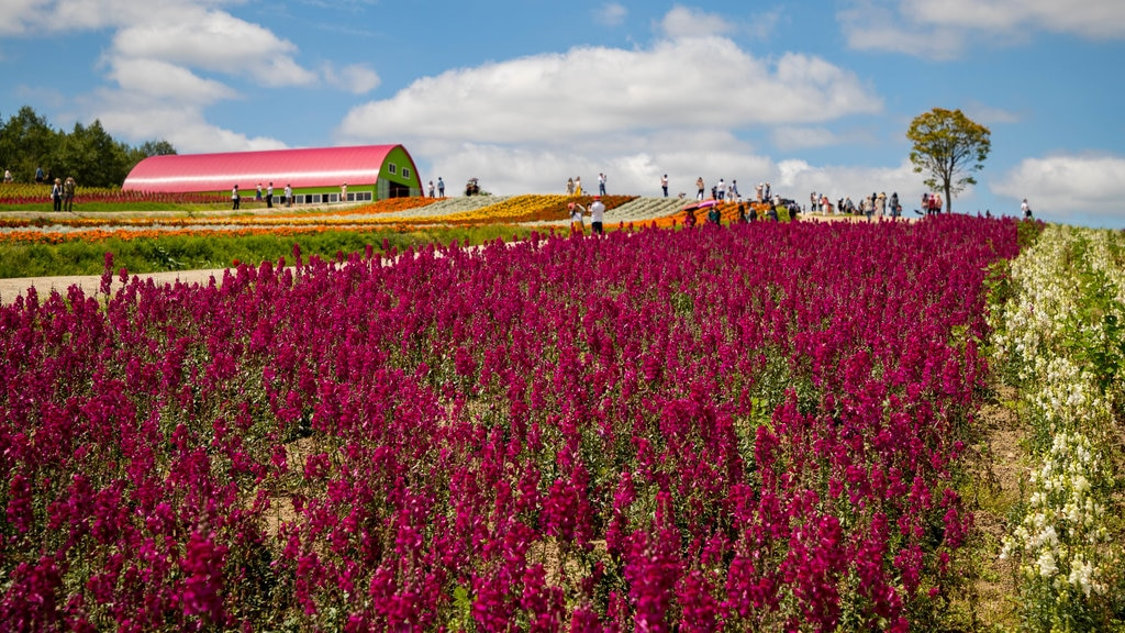Shikisai no Oka showing farmland and flowers